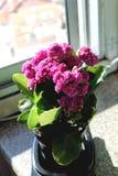 Dias ensolarados, violetas e perspectivas imagem de stock