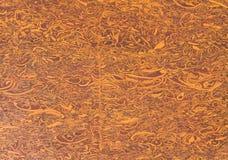 Diaspro breccioso fossilizzato fotografia stock