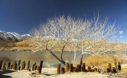Diaz jezioro Nevada Sceniczny Krajobrazowy Samotny Sosnowy Kalifornia i sierra zdjęcie royalty free