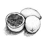 Dibujado en un limón blanco del fondo, gotas de limón, ejemplo del vector Imagenes de archivo