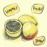 Dibujado en un limón blanco del fondo, gotas de limón, ejemplo del vector Imágenes de archivo libres de regalías