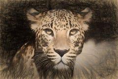 Dibuje a lápiz el bosquejo con la imagen de un leopardo Imagen de archivo