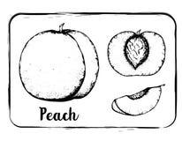 Dibujo blanco y negro de la mano del bosquejo de la fruta del bosquejo de la fruta aislado Imagen de archivo