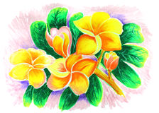 Dibujo color de rosa del desierto Fotos de archivo