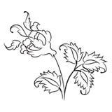 Dibujo color de rosa del estilo de Iznik ilustración del vector