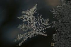 Dibujo congelado durante invierno Imagenes de archivo