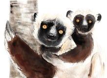 Dibujo de animales - sifaki de la acuarela con el bebé, lémur ilustración del vector