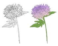 Dibujo de bosquejo de la bardana, vector botánico de la flor ilustración del vector