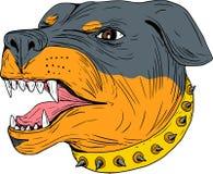 Dibujo de Dog Head Aggressive del guardia de Rottweiler Imagen de archivo libre de regalías