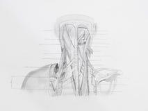 Dibujo de lápiz de los músculos traseros del cuello Imágenes de archivo libres de regalías