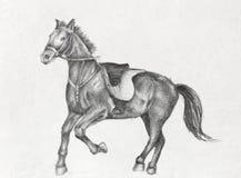 Dibujo de lápiz de un caballo corriente Fotos de archivo libres de regalías