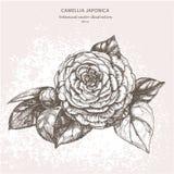 Dibujo de la acuarela de la mano de la gardenia de la flor Fotos de archivo libres de regalías