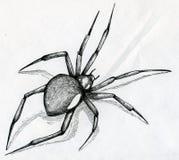 Dibujo de la araña de la viuda negra ilustración del vector