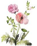Dibujo de la flor de la acuarela Imágenes de archivo libres de regalías