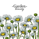 Dibujo de la frontera de la flor de la margarita Modelo inconsútil floral dibujado mano del vector Manzanilla Fotos de archivo