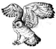 Dibujo de la mano de un búho del vuelo Fotografía de archivo