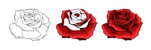 Dibujo de la mano de Rose y coloreado Un capullo de rosa floreciente Ilustración del vector libre illustration