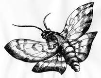 Dibujo de la tinta de la polilla Fotografía de archivo libre de regalías