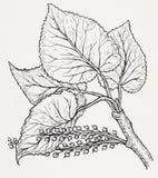Dibujo de un árbol Fotos de archivo