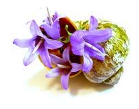 Dibujo de una campana púrpura de la flor en una concha marina desigual vieja Foto de archivo