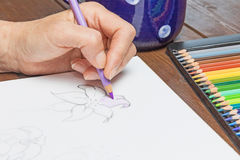 Dibujo de una flor del lirio Imagen de archivo