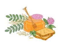 Dibujo del cazo en el tarro de cristal de miel, pares de rebanadas del pan o de tostadas, flor del trébol e inflorescencia del ac Stock de ilustración