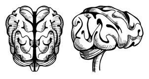 Dibujo del cerebro Fotografía de archivo libre de regalías