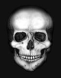 Cráneo en la oscuridad ilustración del vector