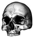 Dibujo del estilo de Vinatge del cráneo libre illustration