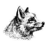 Dibujo del Fox Fotografía de archivo libre de regalías