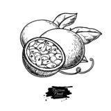 Dibujo del vector de la fruta de la pasión Ejemplo tropical exhausto de la comida de la mano Passionfruit grabado del verano fotos de archivo
