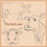 Dibujo del vector de la vaca en diversas posiciones Foto de archivo libre de regalías