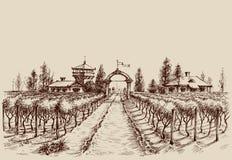 Dibujo del viñedo ilustración del vector