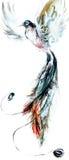 Dibujo en el papel del pájaro hermoso del paraíso Imágenes de archivo libres de regalías