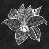 Dibujo floral elegante de la mano de los elementos del vector Fotografía de archivo