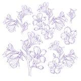 Dibujo gráfico de la flor de la orquídea Imagen de archivo libre de regalías