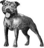 Dibujo inglés del stafford del perro stock de ilustración