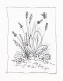 Dibujo lineal de malas hierbas stock de ilustración