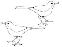 Dibujo lineal de pájaros, Thrasher Imagenes de archivo