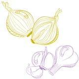 Dibujo monocromático de la cebolla y del ajo Fotografía de archivo