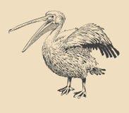 Dibujo original de la tinta del pelícano con el pico abierto Imagen de archivo libre de regalías