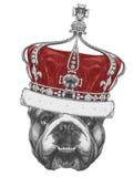 Dibujo original del dogo inglés con la corona Imagen de archivo libre de regalías