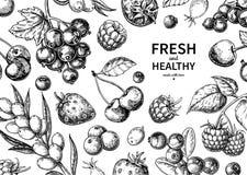Dibujo salvaje de la baya Marco dibujado mano del vector del vintage Sistema de la fruta del verano ilustración del vector