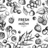 Dibujo salvaje de la baya Marco dibujado mano del vector del vintage Sistema de la fruta del verano stock de ilustración