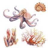 Dibujos en el tema marino - pulpo, coral, cáscara de la acuarela foto de archivo