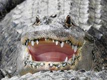 Dica il formaggio, sorrisi dell'alligatore Immagine Stock