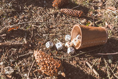 Dice beaker in the forest Royalty Free Stock Images