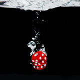 Dice playing in the water Stock Image