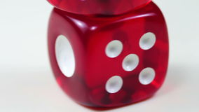 Dice Red Rotating on a White Background stock video