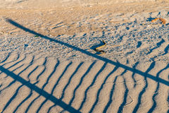Dice snake or Natrix tessellata on sand Royalty Free Stock Photos